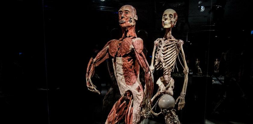 Kontrowersyjna wystawa ludzkich ciał w Krakowie