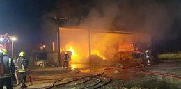 Strażacy uratowali prosiaki z pożaru. W nagrodę dostali TO