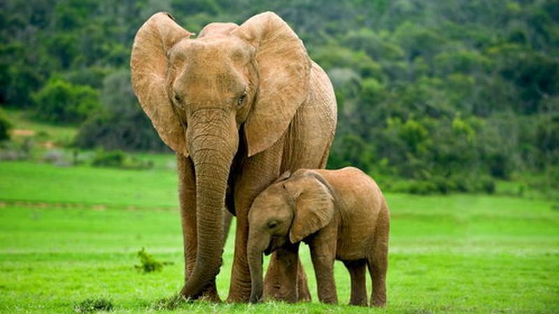 Słonie bardzo się do siebie przywiązują
