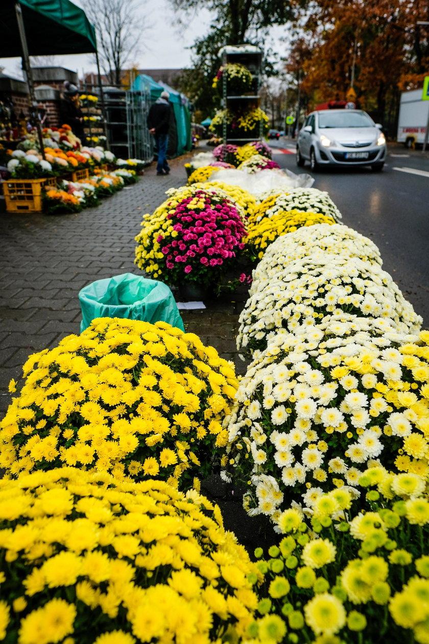 Katowice wykupią chryzantemy od sprzedawców i producentów