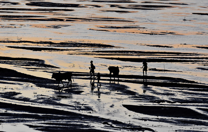 Pastiri teraju stoku kroz reku za vreme zalaska sunca, Madagaskar