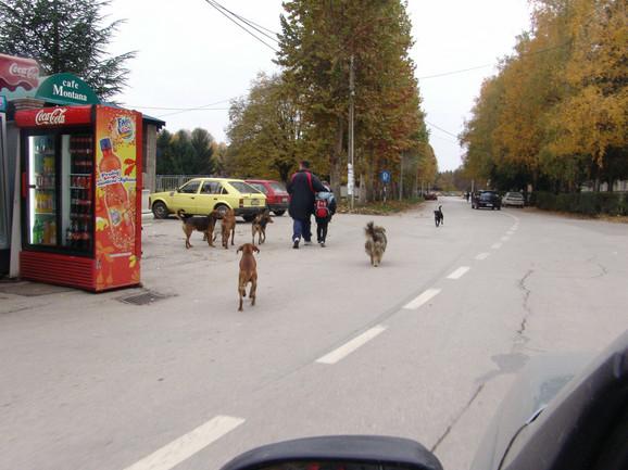 Psi lutalice u Čačku