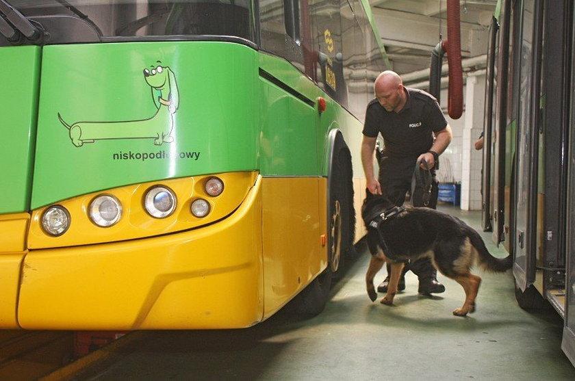Psy policyjne odbyły szkolenie w autobusach MPK
