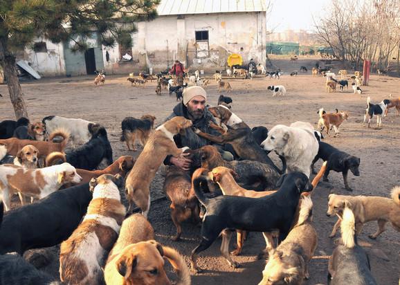 U Azilu boravi oko 450 pasa