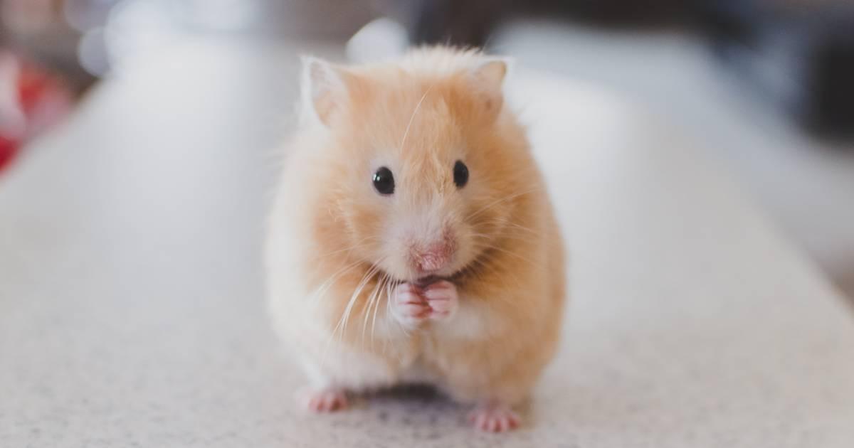 HIV zum ersten Mal geheilt – bei einem Tier
