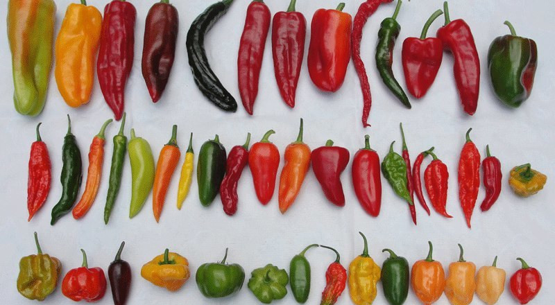 The different types of peppers we have in Nigeria