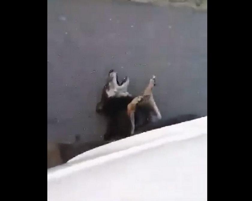Szokujące! Skazany za zabicie psa grozi fundacji: Krew będzie lała się do końca mojego życia!