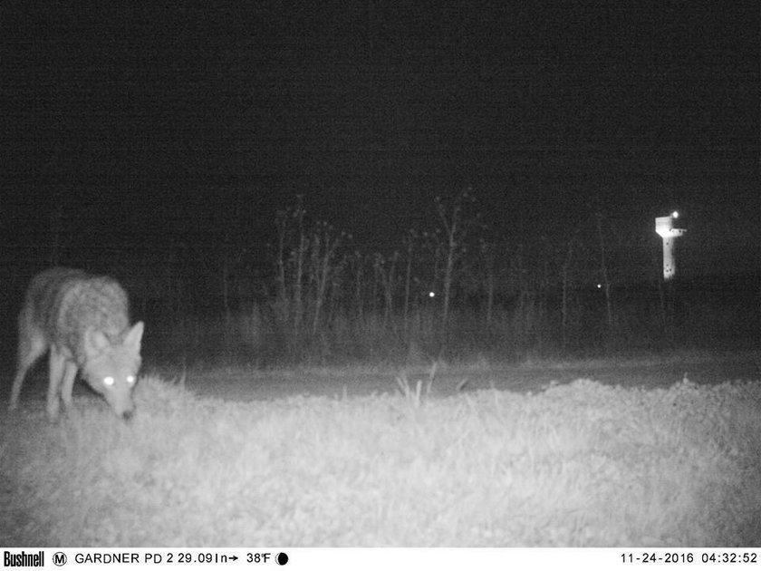 Kamery zarejestrowały inne zwierzęta