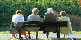 Szokujący pomysł PiS! Uderzy w seniorów? Specjaliści tłumaczą