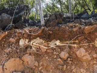 Skeleton buried in exposed dirt layers