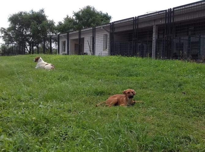 Psi su preko dana redovno van bokseva