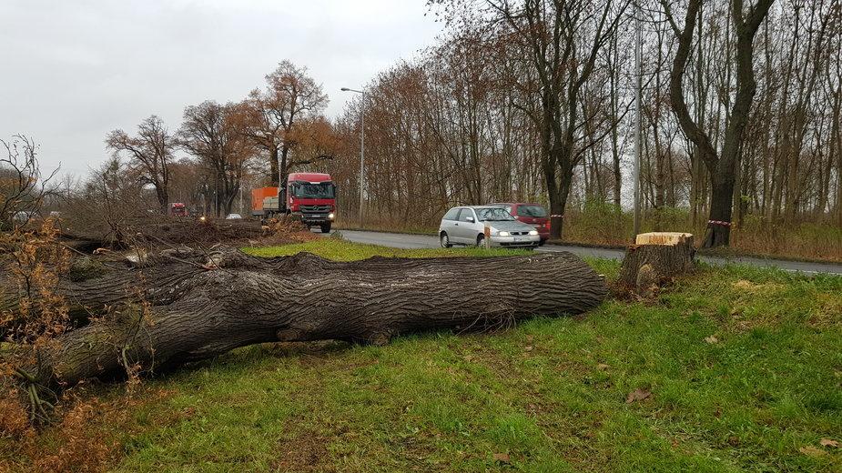 Wycinka drzew przy ul. Walczaka