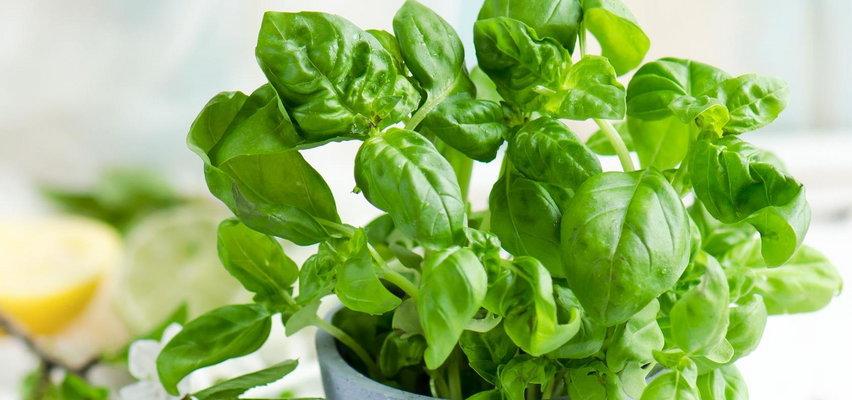 Jak założyć ziołowy ogródek na parapecie?