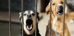 Szokująca decyzja rządu! Muszą oddawać swoje psy na mięso