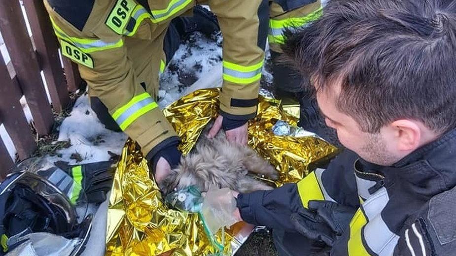 Strażacy reanimują nieprzytomnego psa, który ucierpiał w pożarze
