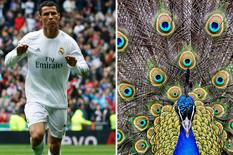 fudbaleri zivotinje09 Cristiano Ronaldo Kristijano foto tanjug ap