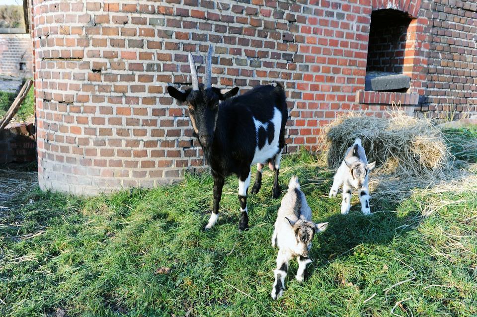 Kozy - znaleziska i wpisy o #kozy w whineymomma.com - od wpisu