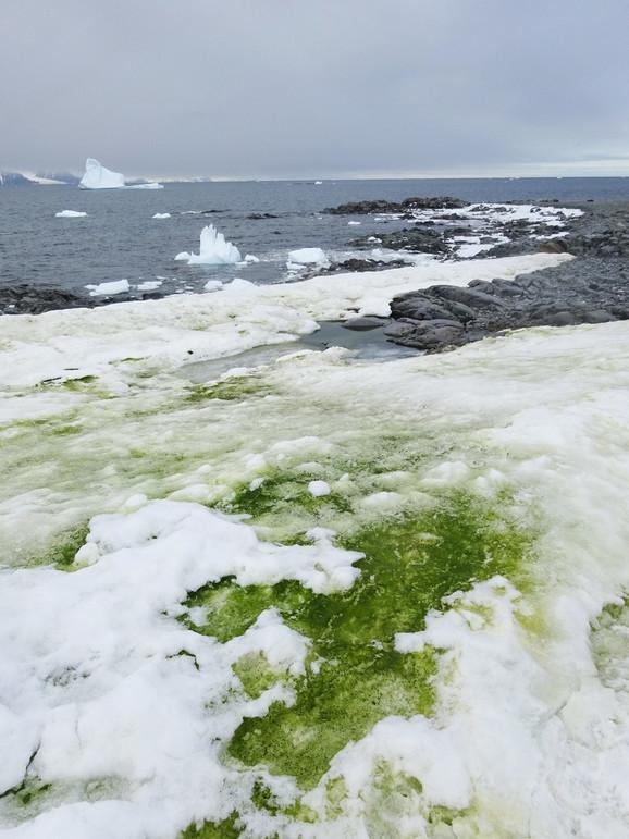Zeleni sneg na Antarktiku