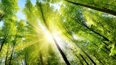Weź udział w drugiej edycji Rankingu Liderzy Klimatyczni - Polska 2022