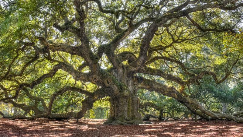 Na gałęzi drzewa wisiał człowiek, słychać było lament kobiety