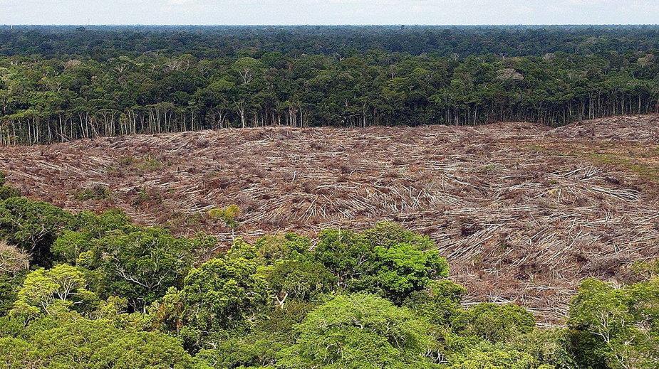 Wycinka amazońskiego lasu pod uprawę soi