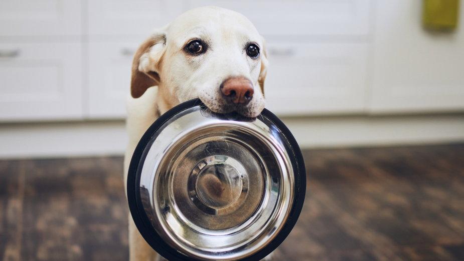 Psy wymagają od opiekuna dużego zaangażowania