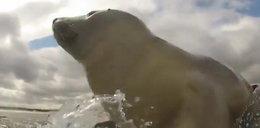 Surfująca foka podbiła serca internautów