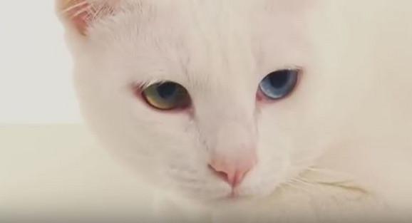 youtube web stranica za upoznavanje mačaka brzinsko druženje tyler tx