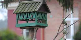 Karmniki dla ptaków zrobione ze... śmieci