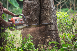 Usunięcie drzew z terenów zabytkowych bez kar finansowych dla sprawcy