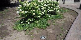 Wstyd! Dziury w ziemi wizytówką Krakowa