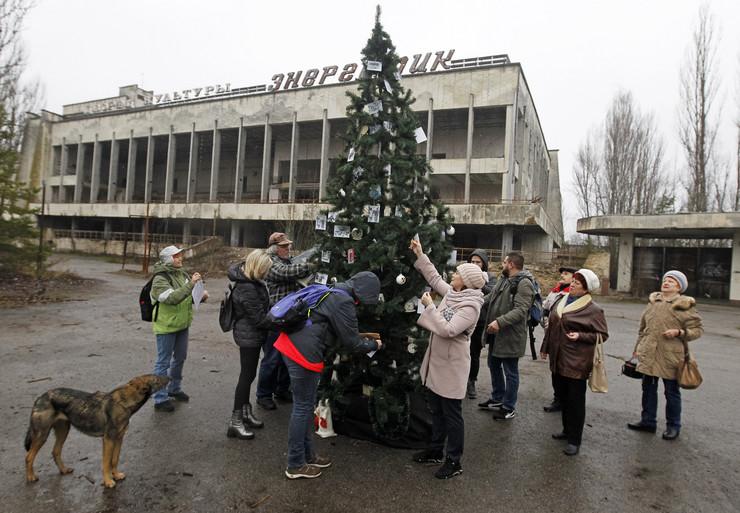 Černobilj, jelka