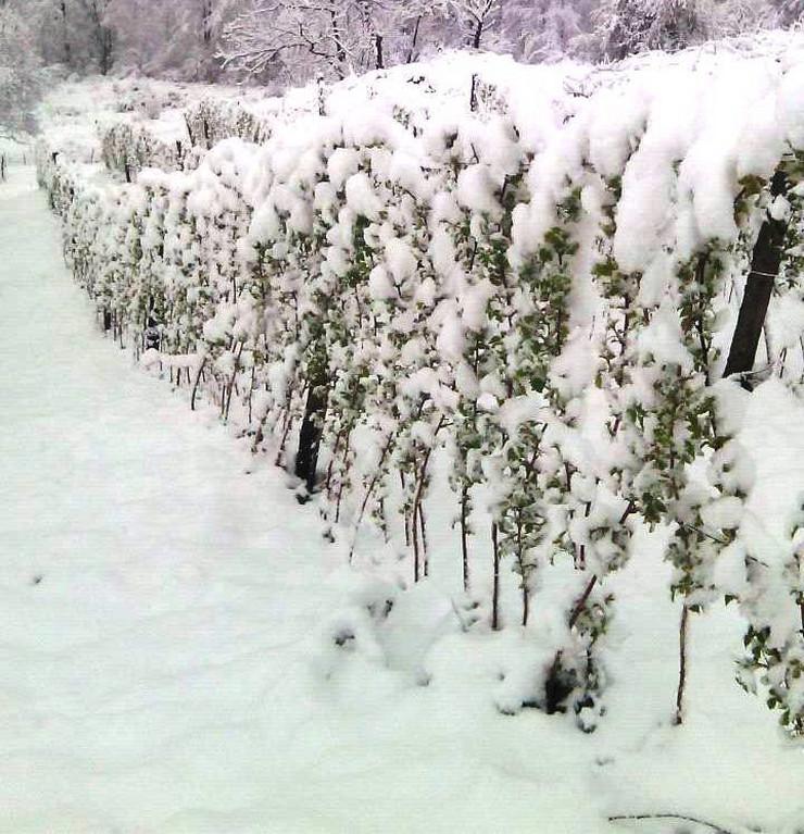 Malinjaci pod snegom 3