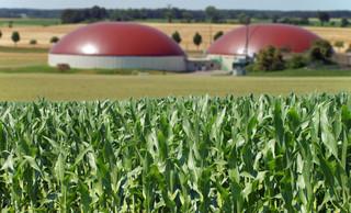 Lewiatan: technologie biogazowe to szansa dla lokalnej przedsiębiorczości