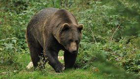 Leśnicy uspokajają, że w lesie jest bezpieczniej niż w mieście