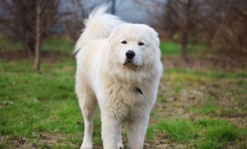 Bezdomne psy z Katanii na Sycylii znalazły schronienie w szwedzkim sklepie