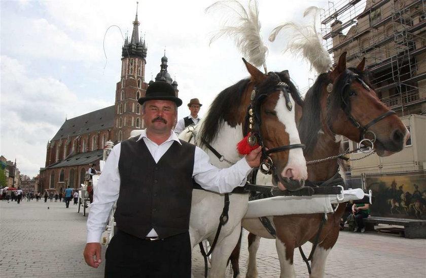 Kodeks pracy dla konia