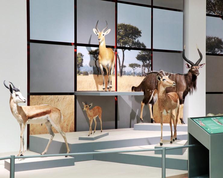 Izložba u Prirodnjačkom centru
