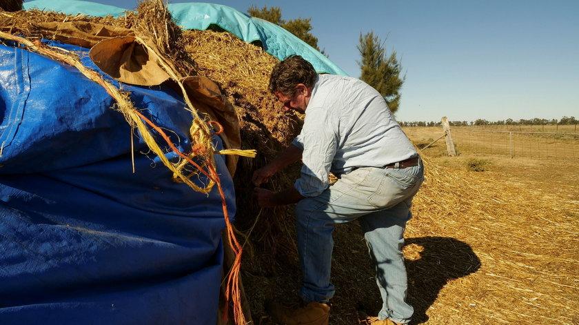 Na zdjęciach: australijscy rolnicy walczący z plagą myszy