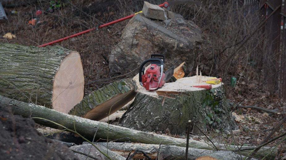 Gdańsk: inwestor wyciął 10 drzew, konserwator zabytków wezwał policję