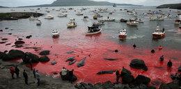 Wstrząsające zdjęcia. Uchwycili morze krwi