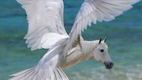 17 hybryd zwierząt, które stworzyła fantazja grafika