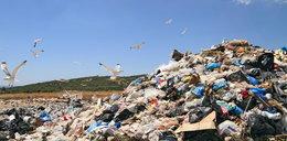 Kto ma posprzątać zaśmiecone lasy?