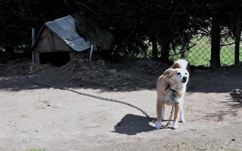 Mieli ratować psy. Okazało się, że trzeba pomóc staruszkowi.