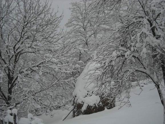 Pokret WWOOF začet je u Engleskoj pre 43 godine, a u Srbiju je stigao pre pet godina: Sneg u Sečoj Reci