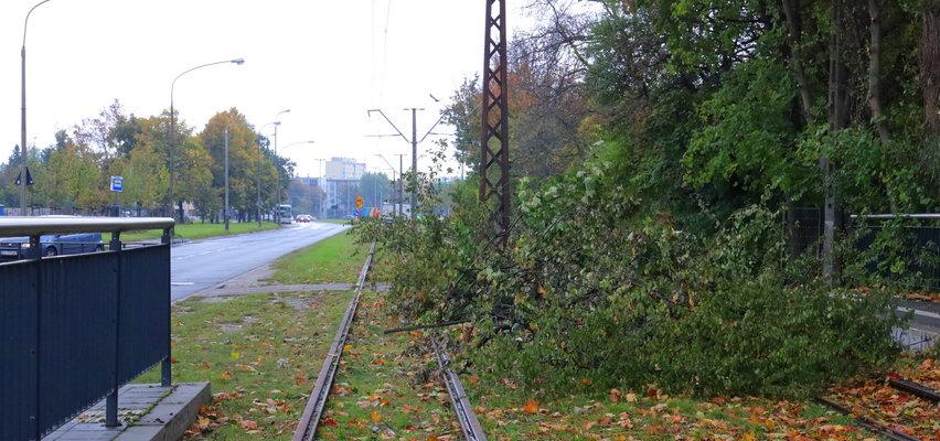 Nie do wiary! Tak pracują urzędnicy w Łodzi. Drzewo wycięli, ale tramwaj i tak nie przyjedzie. Długo...