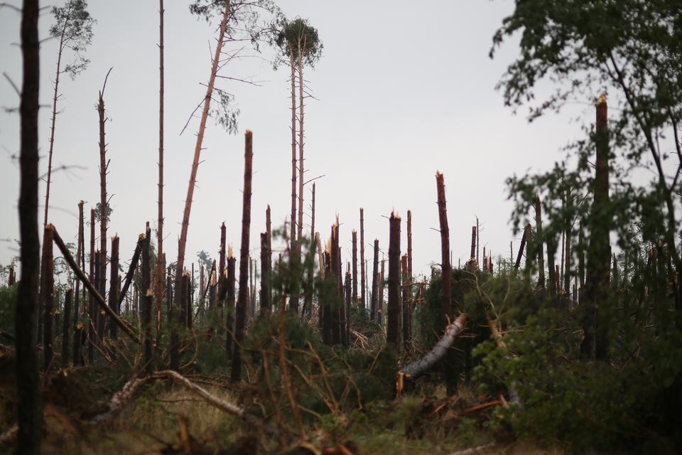 Widok na zniszczony las w miejscowości Lotyń