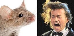 O nie! Rubik miał w domu myszy!