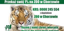 Każdy może pomóc chorzowskiemu Zoo