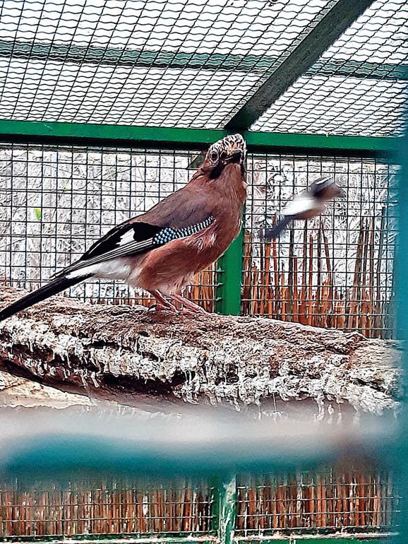 Ptice su najčešće na meti kradljivaca